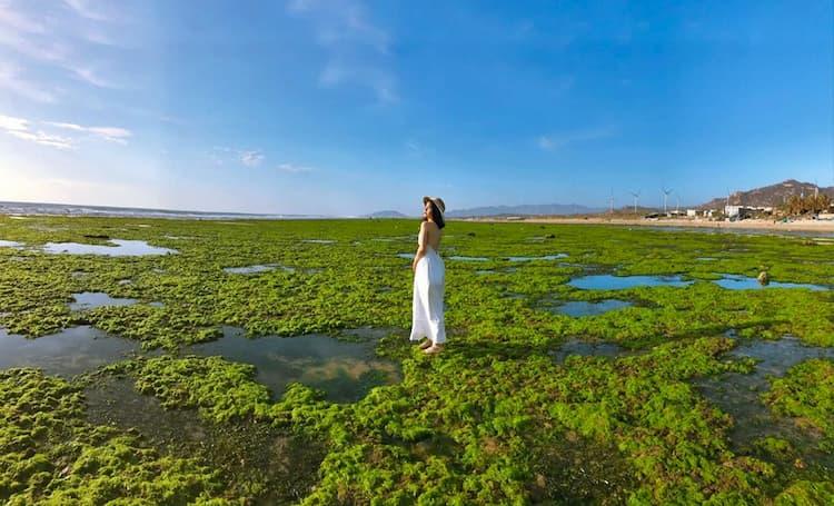 Cánh đồng rong biển Ninh Thuận