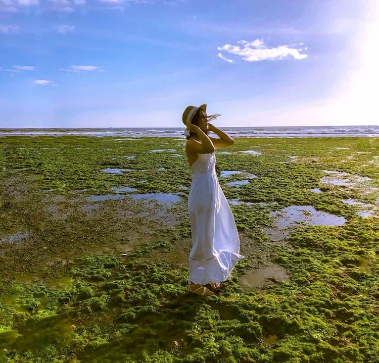 Cánh đồng rong biển đẹp tại Phan Rang