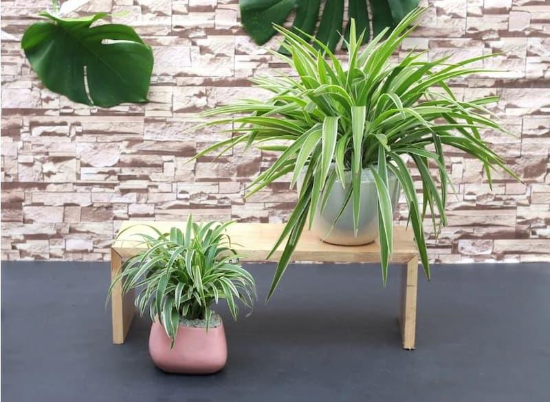 10 loại cây hút không khí ẩm